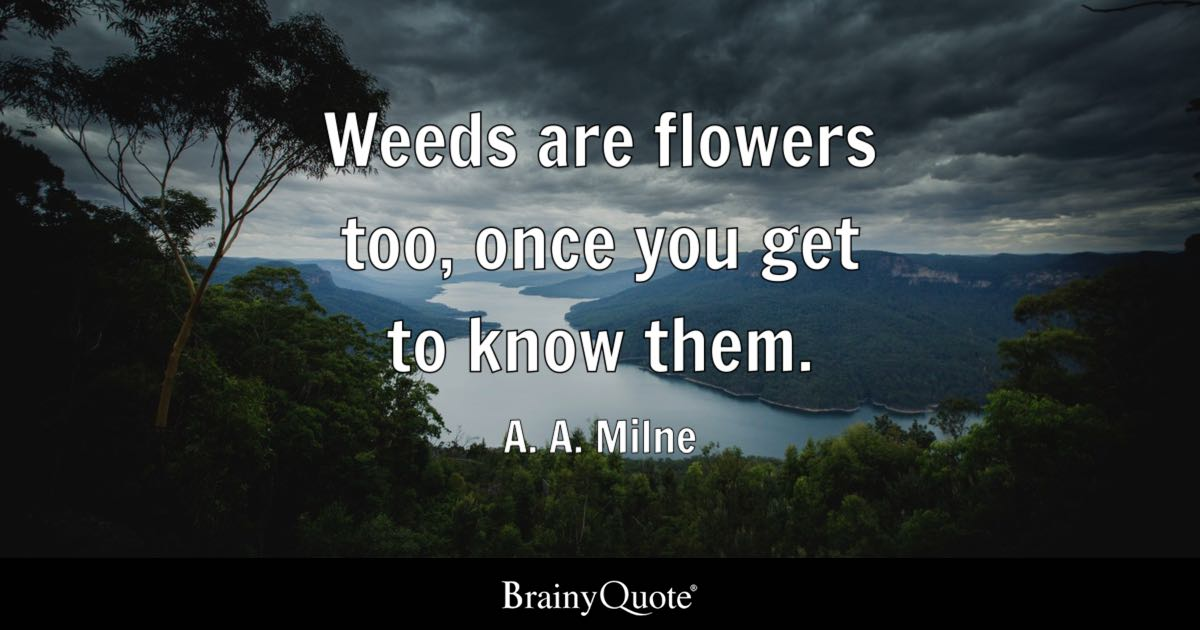 A A Milne Weeds Are Flowers Too Once You Get To Know