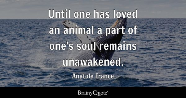 Until One Has Loved An Animal A Part Of Ones Soul Remains Unawakened Anatole