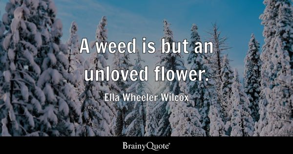A weed is but an unloved flower. - Ella Wheeler Wilcox