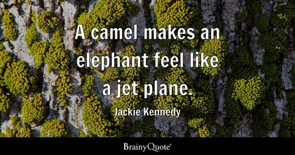 A camel makes an elephant feel like a jet plane. - Jackie Kennedy