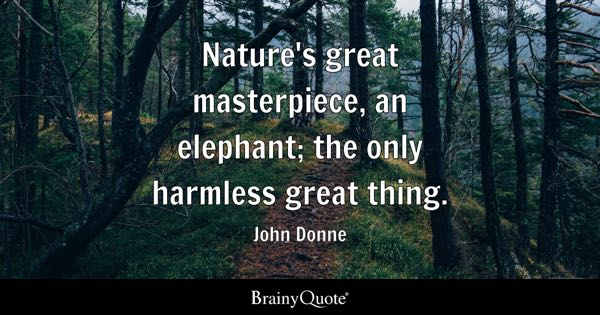 Elephant Quotes Fascinating Elephant Quotes BrainyQuote
