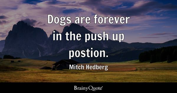 Dogs are forever in the push up postion. - Mitch Hedberg