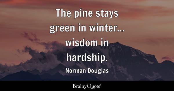 The Pine Stays Green In Winter... Wisdom In Hardship.   Norman Douglas