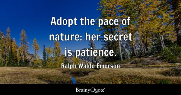 Patience Quotes Brainyquote