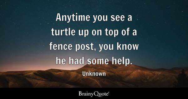 Turtle Quotes Brainyquote