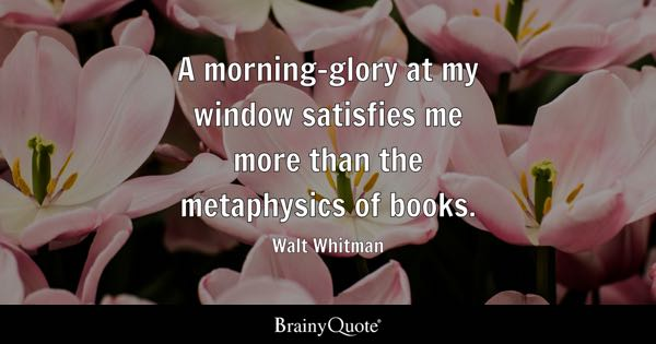 A morning-glory at my window satisfies me more than the metaphysics of books. - Walt Whitman