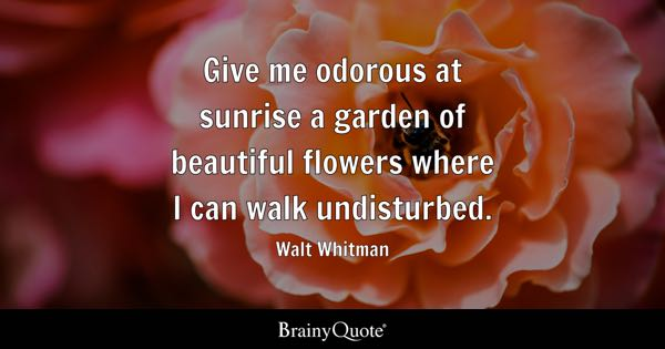 Quotes About Sunrise Brilliant Sunrise Quotes  Brainyquote